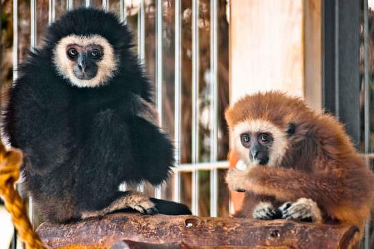 Зоопарк «Ялта Интурист»